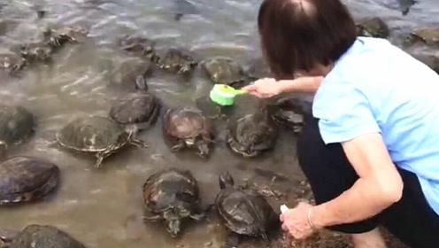 神奇!只要见到她乌龟就会列队冲上岸 原因好暖心
