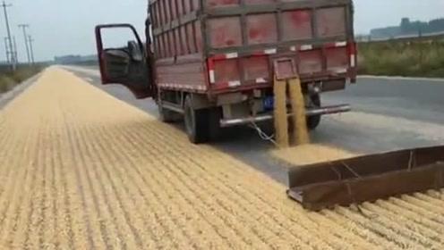 村民在马路边上晒麦子,一辆货车就解决了,完全省了人工!