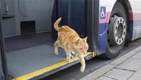 猫咪每天独自坐公交,连续5年风雨无阻,知道原因后感动不少人