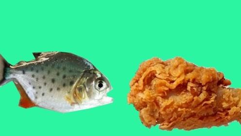 鱼会喜欢吃鸡腿吗?老外将它放进鱼缸中,网友:香喷喷的谁不爱