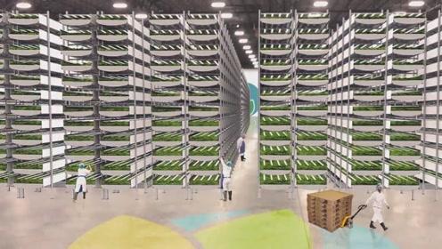 未来种地不用土壤,节约95%的水量,产量是大棚的15倍
