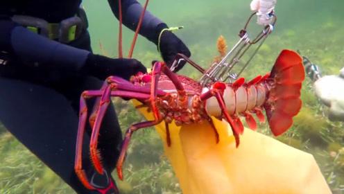 男子潜入水下捕鱼,石缝中全是三四斤的大龙虾,惊喜来的太突然!