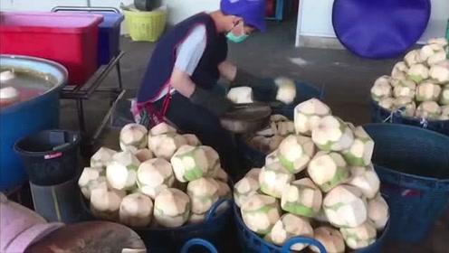 椰子从采摘到发货,原来需要这么多步骤,看完长见识了!
