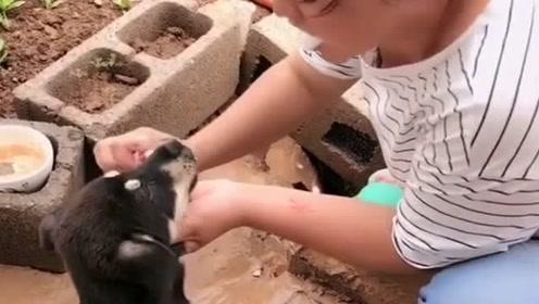 狗狗看女主人刷牙,突然被拉住强行刷牙,一脸无奈但没办法!