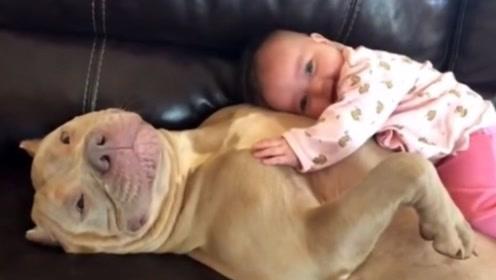 """刚出生的婴儿抱回家,狗狗是怎么知道""""他""""是小主人的?看完不敢相信"""