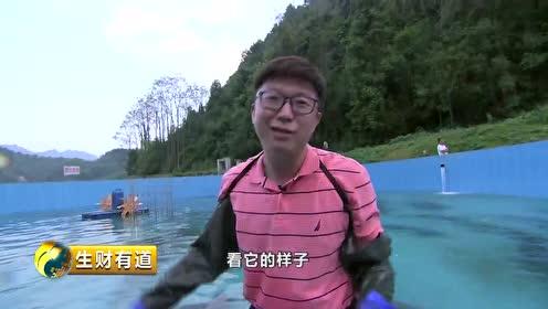 养殖鲟鱼、种植中草药...揭秘贵州江口立足绿水青山的生财之道视频