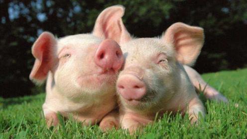 """属猪人和""""这个属相""""做夫妻,老天爷也拆不散,生活幸福美满!"""