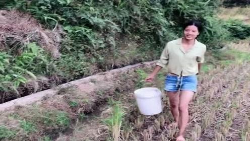 农村小妹妹早上来看收获,没想到全是野生大泥鳅,不愁下酒菜了!
