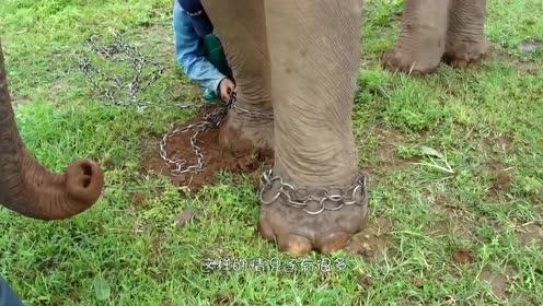 鬣狗为什么会害怕非洲人?看看他们做了什么,真是凄惨可怜