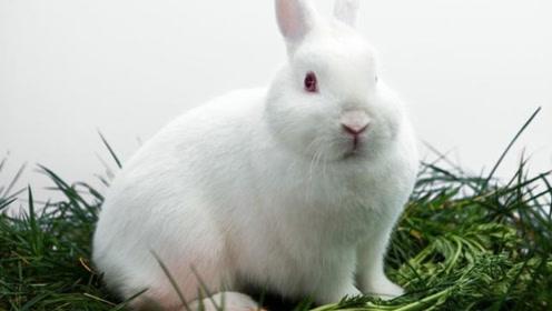 """10月生肖兔要注意!可能会有""""大事""""发生,你身边有属兔的吗?"""