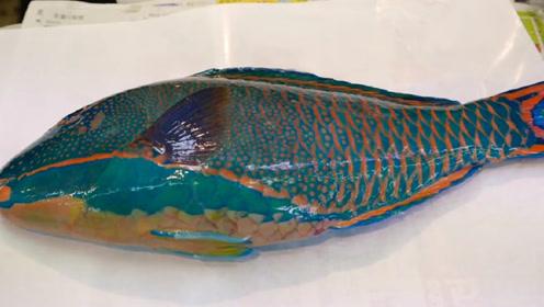 拿破仑鱼有多珍贵?日本顶级大厨开刀,最后被惊艳到了