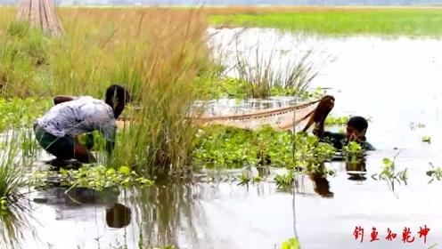 一网包圆,连鱼带草一起拖上岸,这大田螺是真不错!