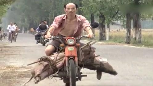 男子拉猪骑摩托,不料意外翻车摔沟里了!笑到肚子疼