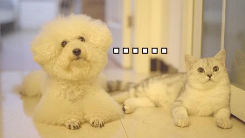 家里进贼还是咱妈有难?小公猫塔可和狗子打110救铲屎官