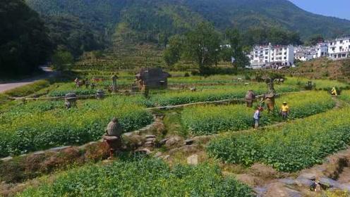 像极了春天!婺源油菜花10月份盛开,游客赞叹:很惊喜