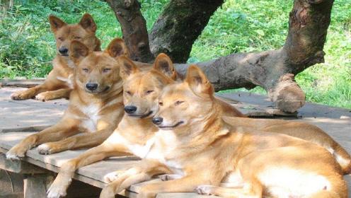 6种专家说最聪明的狗,太通人性了