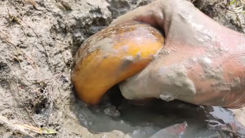 小伙野外发现洞穴,马上撒入猛料,掏出一条巨型黄鳝