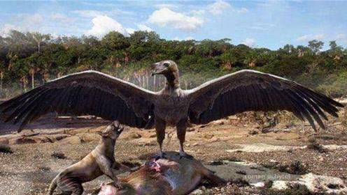 世界上最大的鸟类,双翅有8米长,站起来比姚明还高