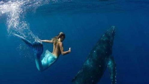 美人鱼真的存在吗?世界各地美人鱼发现,带你逐渐接近真相!