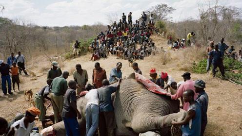 非洲人爱吃大象尸体,到底什么原因?真相令人难以接受!