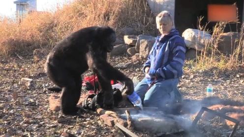 自然界中最聪明的动物,居然可以生火做饭,走时还不忘浇水灭火