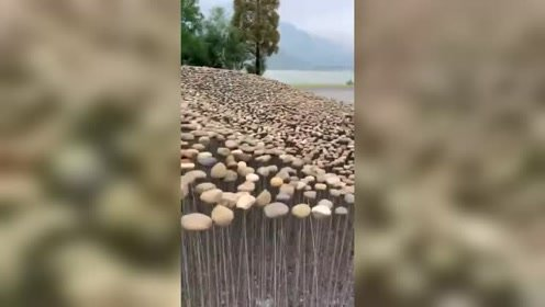 """这是给石头子""""晒太阳""""吗?湖边看到的一幕,真是让人想不到!"""