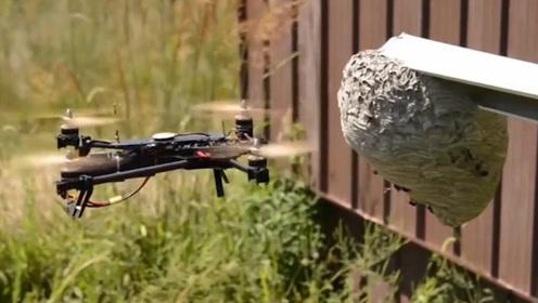 老外用无人机捅马蜂窝,怎么蛰都没用,马蜂要崩溃了