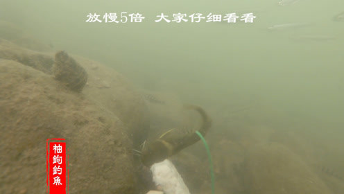 冬天野钓是什么饵料让汪刺鱼多次上钩,水下相机记录真实瞬间