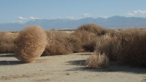 这种植物可以移动,跑的速度还贼快,美国人见到就非常生气