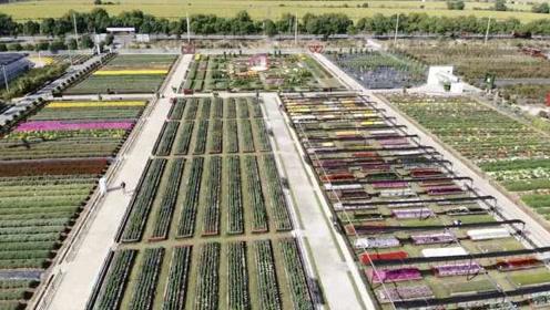 """这大学""""遍地""""菊花:保存5000多份菊花资源,3000多品种"""