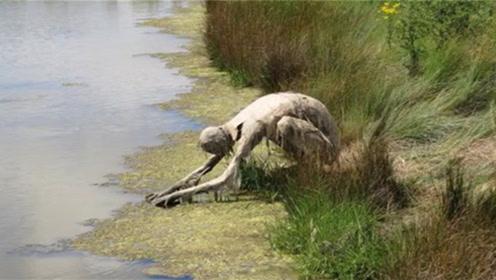 """女子在河边散步,发现一只""""怪物""""趴着喝水,吓得掉头就跑"""