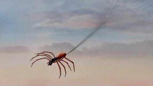 你知道自然界最厉害的飞行员是谁吗?居然是御电的飞天蜘蛛!