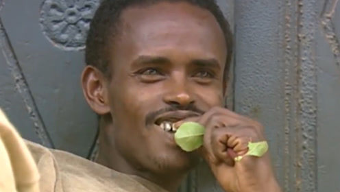 """世界上唯一吃""""树叶""""的国家:一日三餐离不开,被列为""""违禁品""""?"""