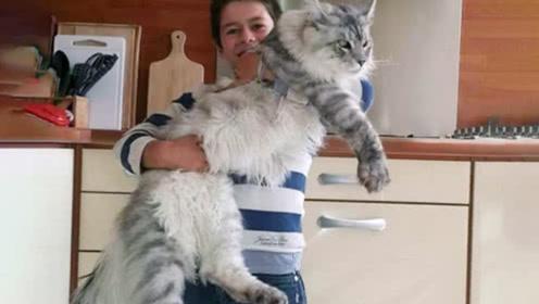 男子探险捡了只流浪猫,养了半年时间就一米长,专家:赚翻了!