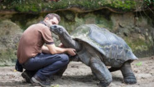 人和乌龟赛跑谁会赢?只要让乌龟先跑,人就再也追不上?