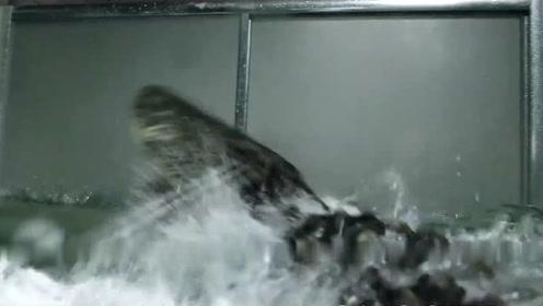 《巨鳄风暴》定档920 人鳄大战上演水中生死时速