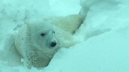 动物园里的动物从没见过大雪,今年赶上大雪,集体嗨起来了