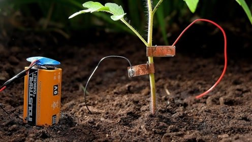将电池放在一株植物旁边,接通电源后,神奇才刚刚开始