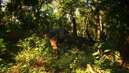 曾被判定灭绝的动物,如今又出现在中国云南,你知道是什么吗