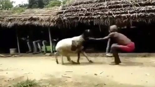 老人恶斗发狂山羊,场面堪比武打片,镜头拍下整个过程