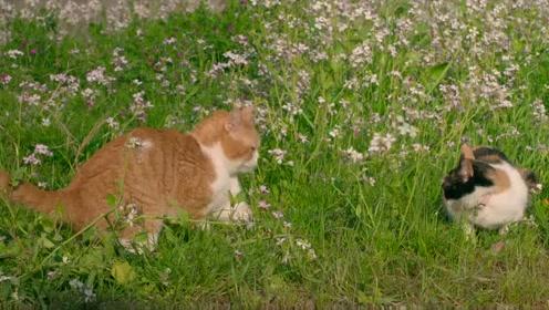 《猫与爷爷》的恬淡日常,是孤岛,也是城市的最后一处栖息地