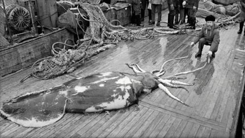 科学家南极探险,在海底深处,发现了一只巨兽!