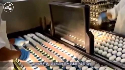鸡蛋也有生产工厂?看完机械生产过程,网友:真是涨见识了!