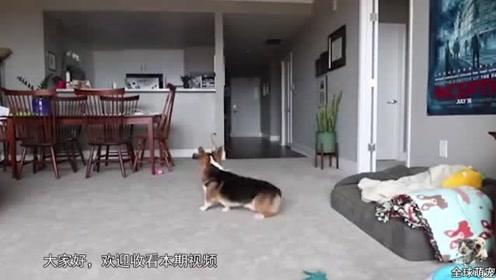 主人想知道不在家时,狗子到底在干嘛,结果发现这小玩意好像过得还挺充实