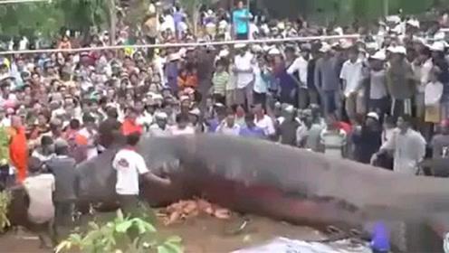 柬埔寨发现巨兽,身长15米,是史上第二次从佛塔钻出来的庞然大物