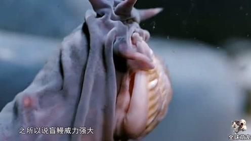 存活了五亿年的生物,连鲨鱼都不敢招惹它,专家:最恐怖的生物