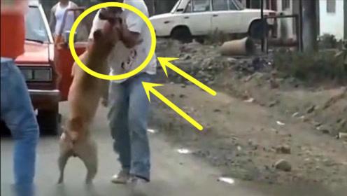 男子与恶狗单挑,没想到下一秒直呼救援,手机拍下全程