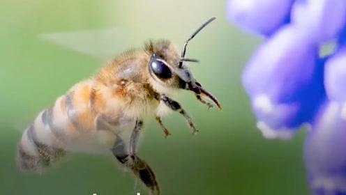专家:昆虫都去哪了?没有昆虫的世界我们将失去很多美景与欢乐