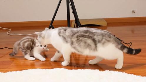 奶猫和爸爸第一次见面,小猫们个个吓成表情包,网友直言心都化了