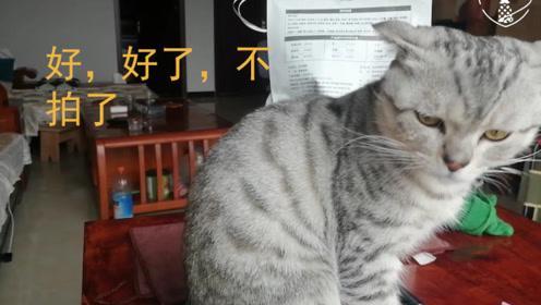 主人偷拍小猫洗脸,被发现后猫咪的反应捂脸,猫:你在干嘛?